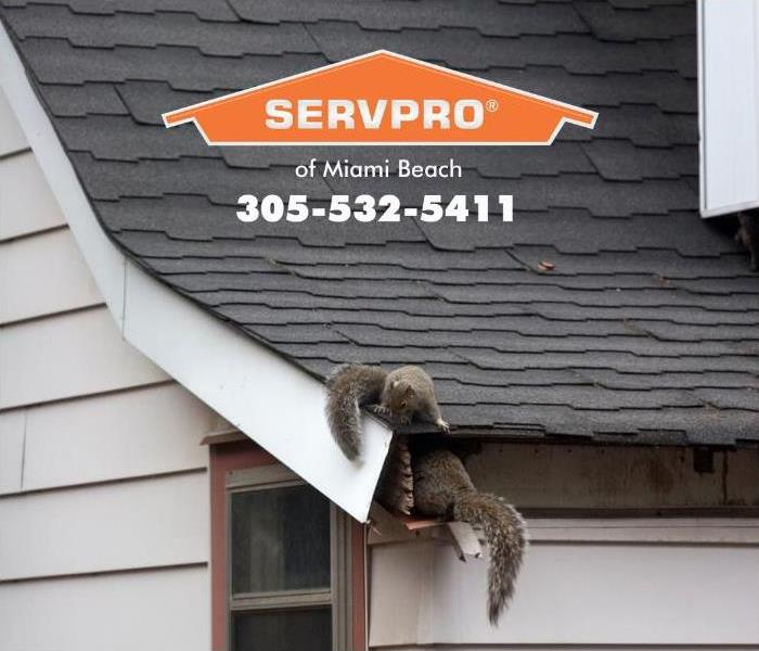 Two squirrels are shown on the rooftop, entering the attic of a home through a small hole.