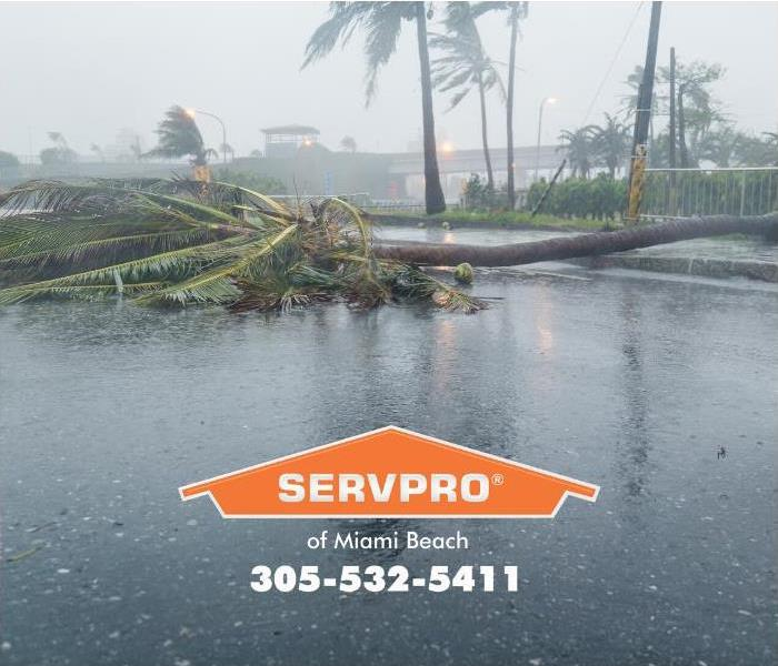 A wind-damaged palm tree lays across the road in front of a commercial building complex in Miami Beach.